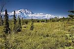 Mt McKinley and the Alaska Range as seen from inside Denali National Park Alaska summer Stock Photo - Premium Rights-Managed, Artist: AlaskaStock, Code: 854-03539440