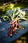 Organic Rhubarb on Table, Ontario, Canada Stock Photo - Premium Rights-Managed, Artist: Derek Shapton, Code: 700-03552421