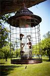 Bird Feeder Hanging from Tree, Prince Edward County, Ontario, Canada Stock Photo - Premium Rights-Managed, Artist: Derek Shapton, Code: 700-03552424