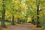 Autumn trees in Hampstead Heath