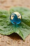 Close-up of Glass Globe on Leaf Stock Photo - Premium Rights-Managed, Artist: David Muir, Code: 700-03553419