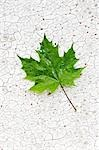Close-up of Maple Leaf on Cracked Surface Stock Photo - Premium Rights-Managed, Artist: David Muir, Code: 700-03553421