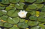 Water Lily in Garden, Schloss Schonbrunn, Vienna, Austria Stock Photo - Premium Royalty-Free, Artist: Bryan Reinhart, Code: 600-03565843