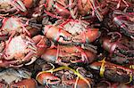 Crabs in Market Stock Photo - Premium Rights-Managed, Artist: dk & dennie cody, Code: 700-03586791