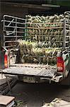 Truckload of Pineapple at Pak Khlong Talat Central Market, Bangkok, Thailand Stock Photo - Premium Rights-Managed, Artist: dk & dennie cody, Code: 700-03586801