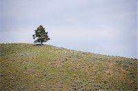 Tree on Hill, British Columbia, Canada Stock Photo - Premium Royalty-Freenull, Code: 600-03586908