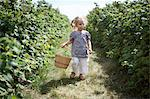Young Girl with Basket, Whittamore's Farm, Markham, Ontario Stock Photo - Premium Rights-Managed, Artist: Michael Alberstat, Code: 700-03587301