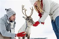 A young couple feeding a baby reindeer Stock Photo - Premium Royalty-Freenull, Code: 618-03612610