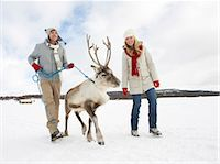 A young couple taking a baby reindeer for walk Stock Photo - Premium Royalty-Freenull, Code: 618-03612611