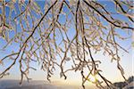 Snow Covered Branches at Sunrise, Wasserkuppe, Rhon Mountains, Hesse, Germany Stock Photo - Premium Royalty-Free, Artist: Raimund Linke, Code: 600-03615514