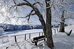 Bench under Snow Covered Tree, Wasserkuppe, Rhon Mountains, Hesse, Germany Stock Photo - Premium Royalty-Free, Artist: Raimund Linke, Code: 600-03615526