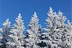 Snow Covered Fir Trees, Wasserkuppe, Rhon Mountains, Hesse, Germany Stock Photo - Premium Royalty-Free, Artist: Raimund Linke, Code: 600-03615529