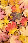 Autumn, Almond Park, Kitsilano, Vancouver, British Columbia, Canada