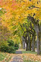 Autumn, 13th Avenue, West Point Grey, Vancouver, British Columbia Stock Photo - Premium Rights-Managednull, Code: 700-03615864