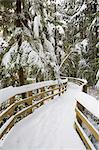 Boardwalk in Winter, Camosun Bog, Pacific Spirit Regional Park, Vancouver, British Columbia, Canada Stock Photo - Premium Rights-Managed, Artist: J. A. Kraulis, Code: 700-03615869