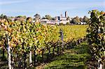 Vineyard of Chateau Saint-Georges, Saint-Emilion, Bordeaux, Gironde, Aquitaine, France Stock Photo - Premium Rights-Managed, Artist: Patrick Chatelain, Code: 700-03615897