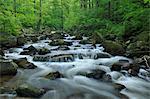 Stream, Ilsetal, Ilsenburg, Harz, Saxony Anhalt, Germany