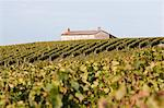 Vineyards at Chateau Saint-Georges, Saint-Emilion, Bordeaux, Gironde, Aquitaine, France Stock Photo - Premium Rights-Managed, Artist: Patrick Chatelain, Code: 700-03615909