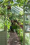 View into sunlit greenhouse Stock Photo - Premium Royalty-Free, Artist: Arcaid, Code: 693-03617099