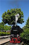 Harz Narrow Gauge Railways, Wernigerode, Harz, Saxony Anhalt, Germany Stock Photo - Premium Rights-Managed, Artist: Raimund Linke, Code: 700-03621113