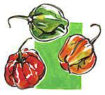 West Indian peppers Stock Photo - Premium Rights-Managed, Artist: Photocuisine, Code: 825-03629219