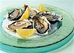 Oysters on coarse salt Stock Photo - Premium Rights-Managed, Artist: Photocuisine, Code: 825-03629373