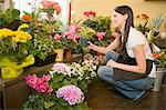 Employee at Florist Examining Flower Displays Stock Photo - Premium Royalty-Freenull, Code: 618-03631095