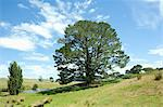 Big tree on the hill Stock Photo - Premium Royalty-Free, Artist: Mark Downey, Code: 618-03631113