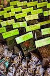 Spices in Market, Campo de Fiori, Rome, Italy Stock Photo - Premium Rights-Managed, Artist: R. Ian Lloyd, Code: 700-03639243