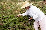 Woman Gardening, Domaine de l'Ardagnole, Fajac-en-Val, Aude, Languedoc Roussillon, France Stock Photo - Premium Rights-Managed, Artist: Puzant Apkarian, Code: 700-03644737