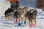 William Pinkham's team leaving the re-start of the 2010 Iditarod Sled Dog Race in Willow, Southcentral Alaska Stock Photo - Premium Rights-Managed, Artist: AlaskaStock, Code: 854-03645820