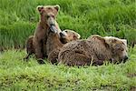 Two Brown Bear (Ursus arctos) cubs cuddling with their mother by Mikfit Creek, McNeil River State Game Sanctuary and Refuge, Southwest Alaska, Summer Stock Photo - Premium Rights-Managed, Artist: AlaskaStock, Code: 854-03646008