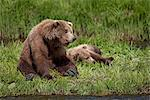 Brown Bear (Ursus arctos) sow sits next to her young cub along the edge of  Mikfit Creek, McNeil River State Game Sanctuary and Refuge, Southwest Alaska, Summer Stock Photo - Premium Rights-Managed, Artist: AlaskaStock, Code: 854-03646009