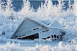 Hoarfrosted bushes and trees surround an earthquake destroyed building located next to the Seward Highway at Mile 80.2, Southcentral Alaska, Winter Stock Photo - Premium Rights-Managed, Artist: AlaskaStock, Code: 854-03646801