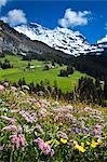 Wildflowers, Jungfrau Region, Bernese Alps, Switzerland Stock Photo - Premium Rights-Managed, Artist: R. Ian Lloyd, Code: 700-03654545