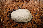 Rock with autumn leaves Stock Photo - Premium Royalty-Free, Artist: GreatStock, Code: 698-03670705