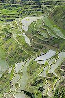philippine terrace farming - Mud-walled rice terraces of Ifugao culture, Banaue, UNESCO World Heritage Site, Cordillera, Luzon, Philippines, Southeast Asia, Asia Stock Photo - Premium Rights-Managednull, Code: 841-03672354