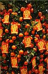Tangerine good luck symbols, Chinese New Year decoration, Macao, China, Asia Stock Photo - Premium Rights-Managed, Artist: Robert Harding Images, Code: 841-03675845