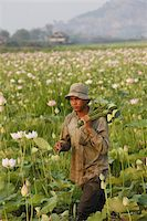 Lotus farmer, Siem Reap, Cambodia, Indochina, Southeast Asia, Asia Stock Photo - Premium Rights-Managednull, Code: 841-03676034