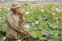 Lotus farmer, Siem Reap, Cambodia, Indochina, Southeast Asia, Asia Stock Photo - Premium Rights-Managednull, Code: 841-03676035