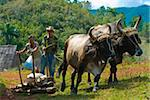 Ox cart with farmers, Vinales, Cuba, West Indies, Caribbean, Central America