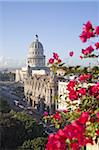 Bougainvillea flowers in front of The Capitolio building, Havana, Cuba, West Indies, Central America Stock Photo - Premium Rights-Managed, Artist: Robert Harding Images, Code: 841-03677184