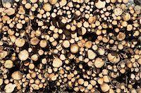 Woodpile, Krageroe, Telemark County, Eastern Norway, Norway Stock Photo - Premium Royalty-Freenull, Code: 600-03682071