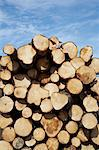 Woodpile, Krageroe, Telemark County, Eastern Norway, Norway