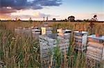 Wooden Beehives in Field at Summer, Cotswolds, Gloucestershire, England Stock Photo - Premium Rights-Managed, Artist: Tim Hurst, Code: 700-03682427