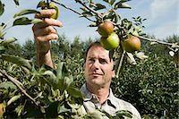 single fruits tree - Man picking fresh apples Stock Photo - Premium Royalty-Freenull, Code: 614-03684457