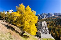 Ash Tree and Castello di Andraz in Autumn, Mount Castello, Dolomites, Italy Stock Photo - Premium Rights-Managednull, Code: 700-03685921