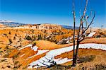 Dead Tree and Sandstone Landscape, Bryce Canyon National Park, Utah, USA Stock Photo - Premium Rights-Managed, Artist: Patrick Chatelain, Code: 700-03686017