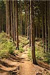 Forest Path, Balkhausen, Rheinisch-Bergischer Kreis, North Rhine-Westphalia, Germany Stock Photo - Premium Royalty-Free, Artist: Matt Brasier, Code: 600-03697909