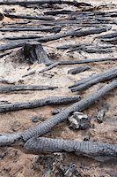 Burnt Logs in Forest, British Columbia, Canada Stock Photo - Premium Royalty-Freenull, Code: 600-03698367